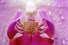 Flor de Orhid no fim acima imagens de stock royalty free