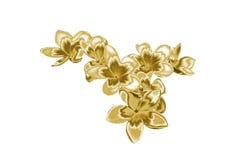 Flor de oro Foto de archivo libre de regalías