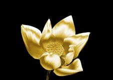 Flor de oro Imagen de archivo libre de regalías