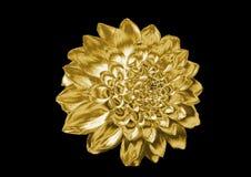 Flor de oro Imagen de archivo