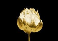 Flor de oro Fotografía de archivo libre de regalías