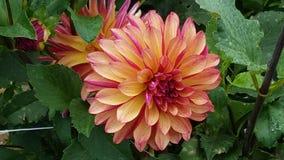 Flor de outubro foto de stock