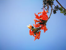 Flor de Palas Imagem de Stock