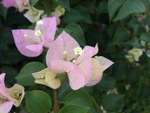 Flor de papel bueatiful Imagem de Stock