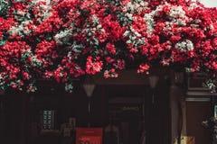 Flor de papel da beleza em Vietnam foto de stock