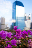 Flor de papel na cidade Fotos de Stock