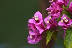 Flor de papel roxa Fotografia de Stock Royalty Free