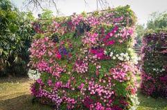 Flor de pared Fotografía de archivo libre de regalías