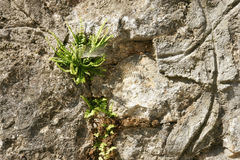 Flor de pared - 33 Fotos de archivo