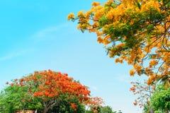 Flor de pavo real Imágenes de archivo libres de regalías