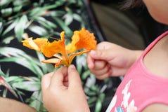 Flor de pavo real en las manos de la niña Fotografía de archivo