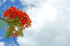 Flor de pavo real verde y roja Imagenes de archivo