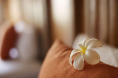 Flor de Plumelia en la almohada Fotos de archivo
