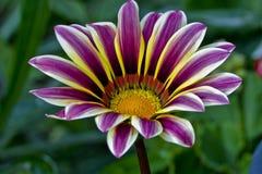 Flor de polinización Fotos de archivo libres de regalías