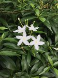 Flor de PUD fotos de archivo libres de regalías