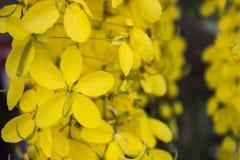Flor de Puddingpipe Imagen de archivo