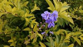 Flor de Purpule Naturaleza Hojas Fondo ellos Imagen de archivo libre de regalías