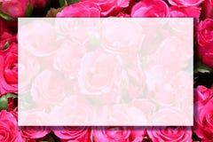 Flor de Rosa com copyspace foto de stock royalty free