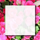 Flor de Rosa com copyspace foto de stock