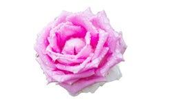 Flor de Rosa com gotas de ?gua imagens de stock royalty free