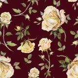 Flor de Rosa em um galho Teste padrão floral sem emenda Pintura da aguarela Ilustração desenhada mão Imagem de Stock
