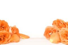 Flor de Rosa no assoalho de madeira Foto de Stock