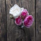 Flor de Rosa sobre o fundo de madeira rústico Foto de Stock