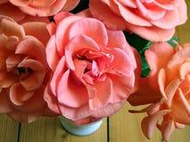 Flor de rosas rosadas Imagenes de archivo