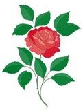 Flor de Rose stock de ilustración