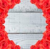 Flor de Rose en el jardín para el día de tarjetas del día de San Valentín Imágenes de archivo libres de regalías
