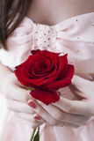 Flor de Rose en manos femeninas Fotografía de archivo libre de regalías