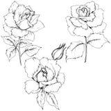 Flor de Rose en un estilo del vector aislada Imagen de archivo