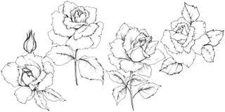 Flor de Rose en un estilo del vector aislada Imagenes de archivo