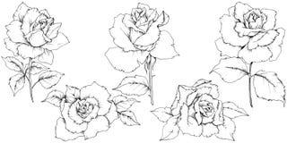 Flor de Rose en un estilo del vector aislada Fotografía de archivo