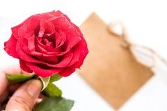 Flor de Rose para el día de tarjetas del día de San Valentín Imagenes de archivo