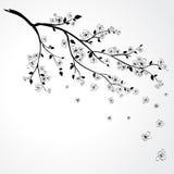 Flor de Sakura ilustração stock