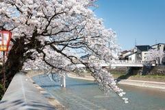 Flor de Sakura en el árbol a lo largo del canal Foto de archivo
