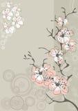 Flor de Sakura en gris Imágenes de archivo libres de regalías
