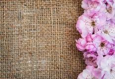 Flor de Sakura en un fondo de la arpillera Imagen de archivo libre de regalías