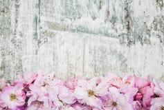 Flor de Sakura en un viejo fondo de madera Imágenes de archivo libres de regalías