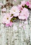 Flor de Sakura en un viejo fondo de madera Foto de archivo