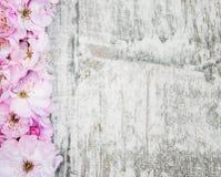 Flor de Sakura en un viejo fondo de madera Fotos de archivo libres de regalías