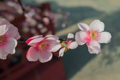 Flor de Sakura, flor falsa Foto de archivo