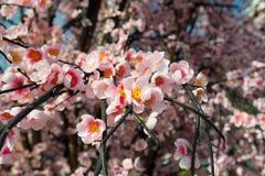 Flor de Sakura, flor falsa Imagenes de archivo