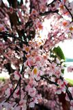 Flor de Sakura, flor falsa Imágenes de archivo libres de regalías