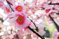 Flor de Sakura, flor falsa Fotos de archivo libres de regalías