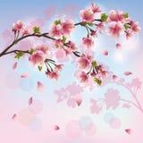 Flor de Sakura - fondo japonés del cerezo Fotos de archivo