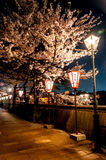 Flor de Sakura a lo largo del camino en la noche Fotos de archivo libres de regalías