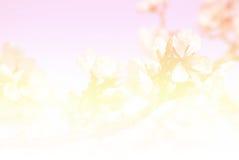 Flor de Sakura que florece en tono del vintage Fotos de archivo