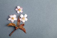 Flor de Sakura y pequeña rama en el fondo rosado azul Imágenes de archivo libres de regalías